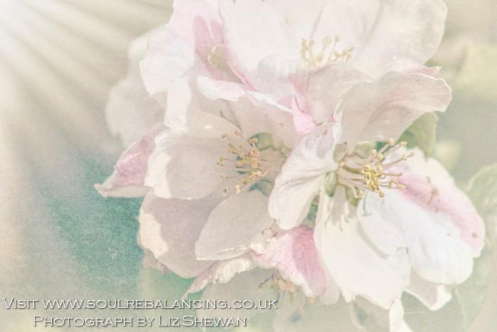 Pink Heaven Ethereal © Liz Shewan 2016.jpg