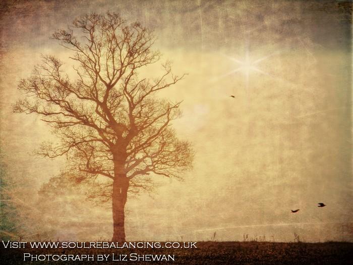 Tree Silouette © Liz Shewan 2016