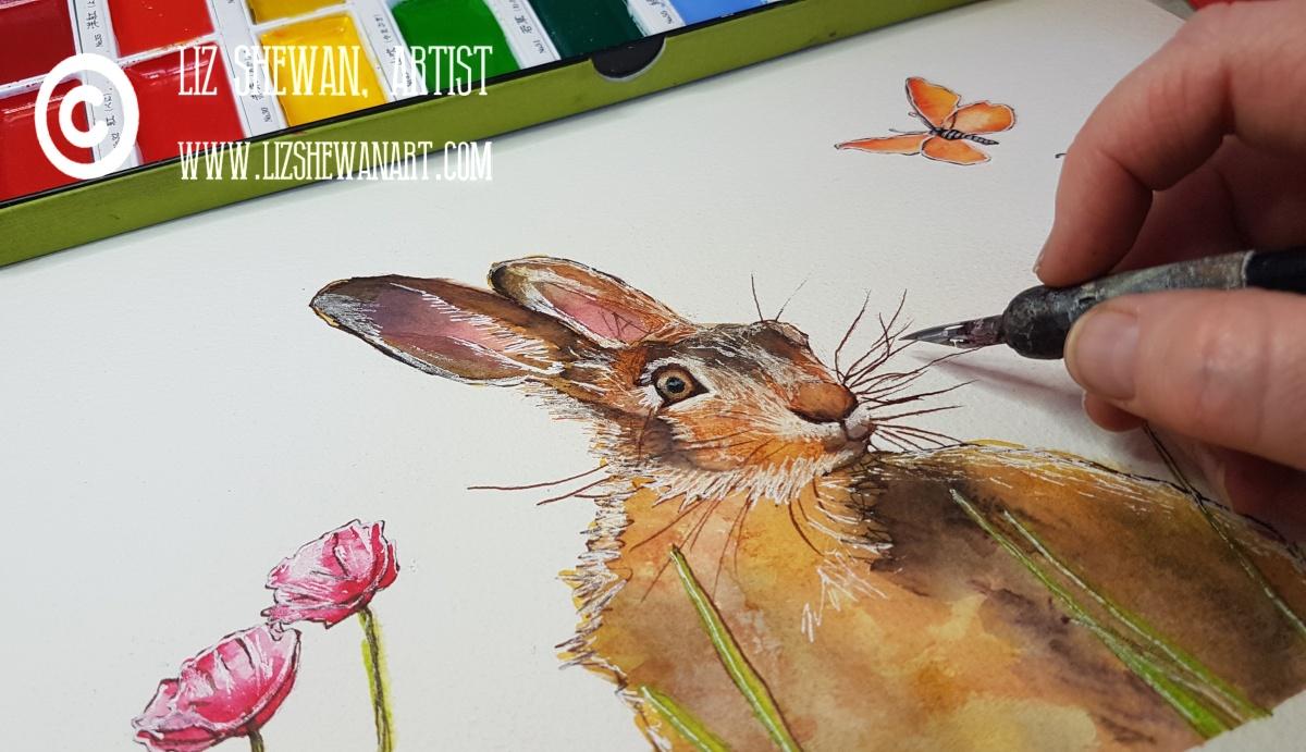 Dorset Wildlife Trust's Kingcombe Centre | July 2020 CANCELLED