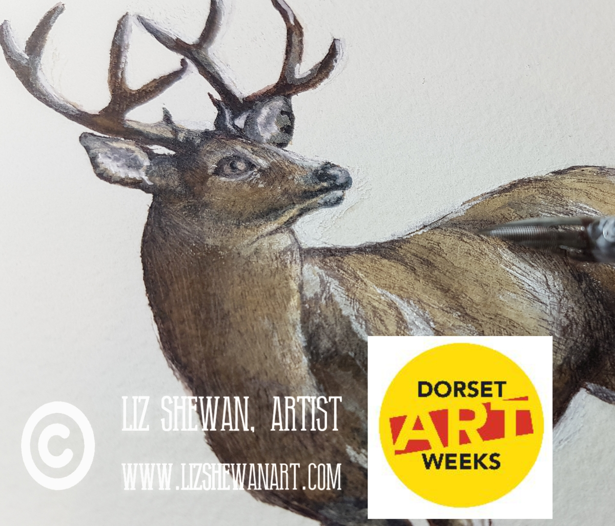 Dorset Art Weeks at Cygnet Gallery in Shaftesbury, Dorset | May and June 2021